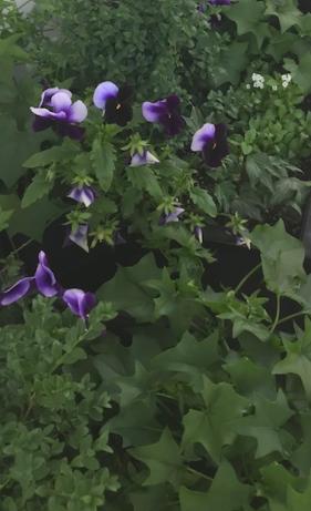 Screen Shot 2019-09-02 at 8.25.16 PM